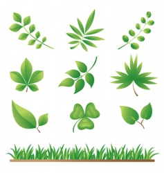grass and leaves vector image vector image