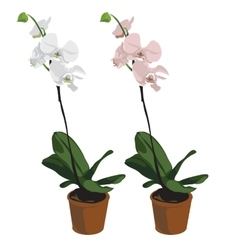 Two orchids in pots flowers isolated vector image vector image