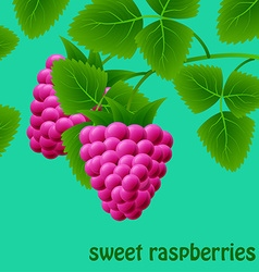 Red juicy sweet raspberries on a branch for your vector