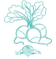 Outline hand drawn sketch of radish flat style vector image