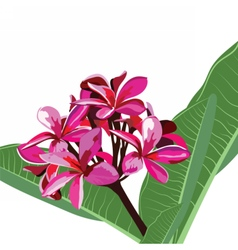 Watercolor pink tropical flower bouquet card vector