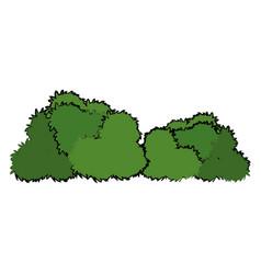 Bushes natural wild flora foliage image vector
