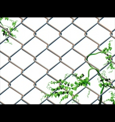 Barbed wire with ivy vector