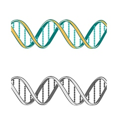Set of two dna symbols on white background vector