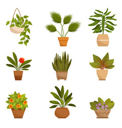 set of home decorative plants vector image vector image