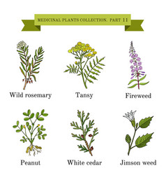 Vintage collection of hand drawn medical herbs and vector