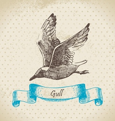 Gull hand drawn vector