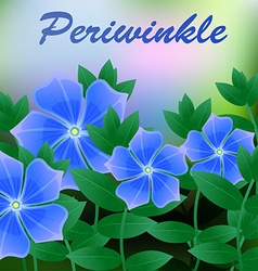 Periwinkle spring flower on blue background with vector image
