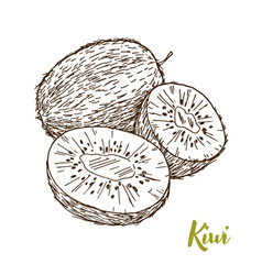 kiwi hand drawn sketch vector image vector image
