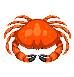 Red crab isolated of seafood on vector
