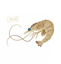 Shrimp cartoon vector