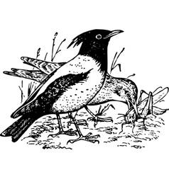 Bird pastor roseus vector