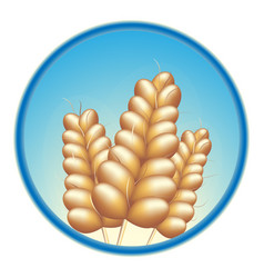 grain wheat barley vector image
