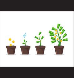 money tree growing in pot vector image