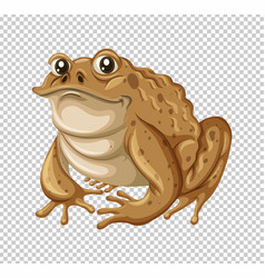 Toad with brown skin vector
