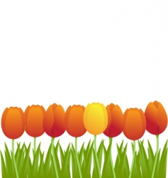 Orange tulips vector