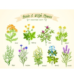 Herbs and wild flowers background set vector