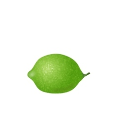 Photo Realistic Lime Isolated vector image