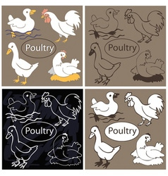 Poultry on dark background vector