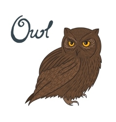 Bird owl vector