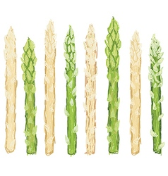 Closeup of fresh green and white asparagus raw vector