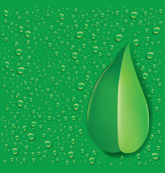 Green leaf with fresh water droplets vector