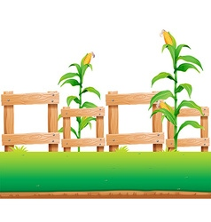 Seamless background with corn and fence vector
