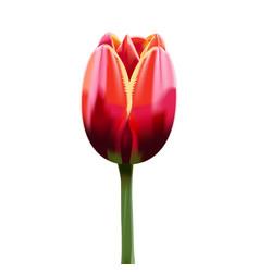 tulip vector image vector image