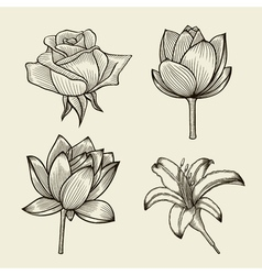 Hand drawn sketch flowers vector image