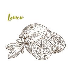 Lemons slice and flower hand drawn vector