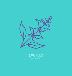 line icon of lavender bunch herbal vector image