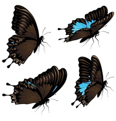 Mountain swallowtail set3 vector