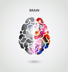 Left and right part of brain vector