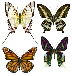 Set of isolated butterflies vector image vector image