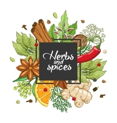 winter square design with spices and herbs vector image