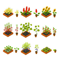 Plant seedling and elements set isometric view vector