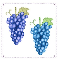 Watercolor grape with leaves in vintage style vector