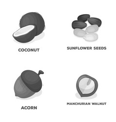 Coconut acorn sunflower seeds manchueian walnut vector