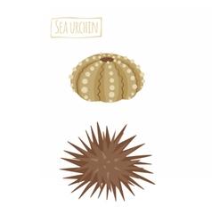 Sea urchin cartoon vector