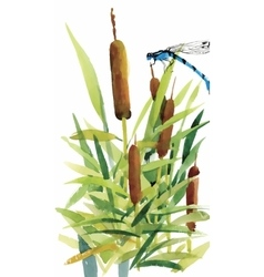 Watercolor reeds with leaves closeup isolated on vector image