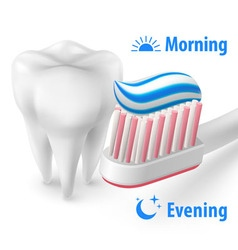 Brushing teeth morning and evening vector