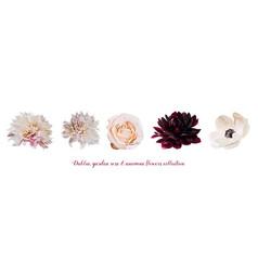 Flower garden pink rose dahlia anemone designer vector