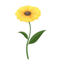 Yellow zinnia flower in isolated vector