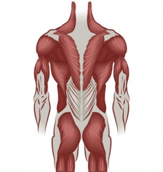human back vector image