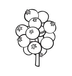 black and white mistletoe berries christmas holly vector image