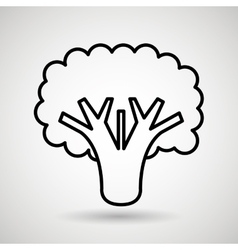 broccoli drawing isolated icon design vector image vector image