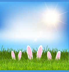 easter bunny ears hidden in grass vector image vector image