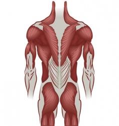 human back vector image