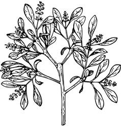 plant loranthus vector image vector image