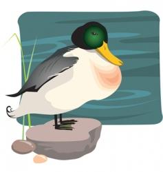 wild duck vector image vector image
